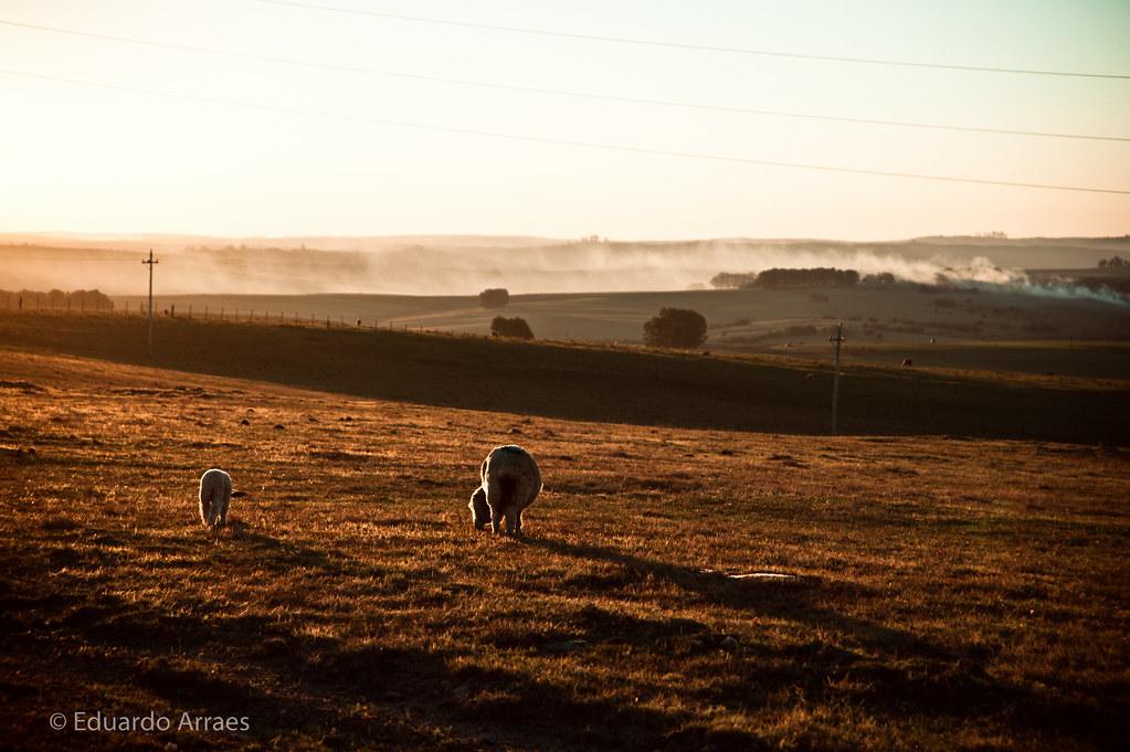 Sunset & Sheeps
