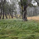 02 Viajefilos en Australia. Barrington NP 34