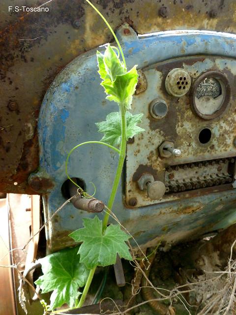 Planta de tractor. Crecimiento 1. Tractor plant. Growing 1.