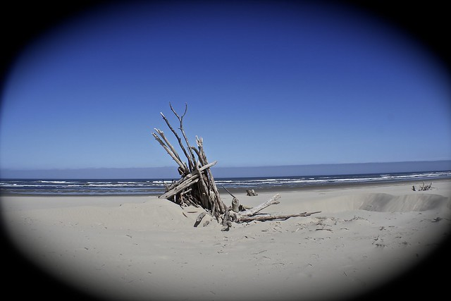Driftwood Shores