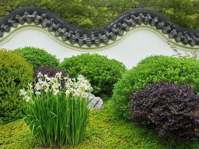 White Iris Chinese wall