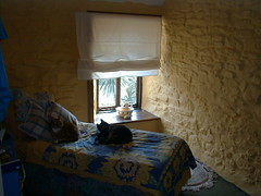 Cats in their Cornish cottage
