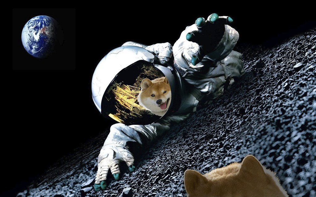 Shiba Inu rises 2200% in just one year. It took 14 months to position itself within the top 20 most popular cryptos. A tweet from Elon Musk seems responsible for increasing the value of SHIB by 500% in a week.