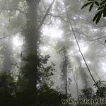 07 Viajefilos en Australia. Dorrigo Rainforest NP 16