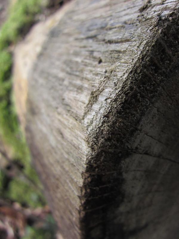 Dans les bois...
