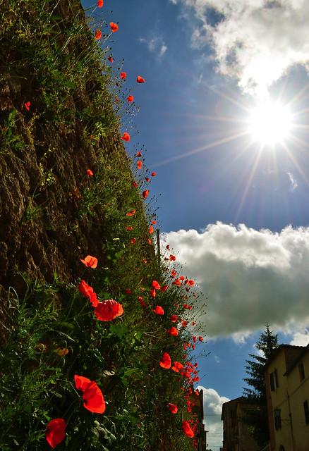 prato sulle mura------lawn on the walls