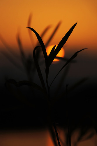 sunset orange plant blur leaves focus silhouettes foreground