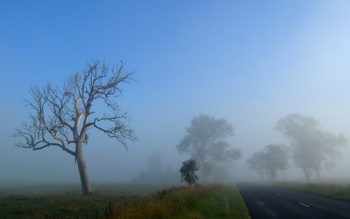 road trees fog countryside day earlymorning australia bluesky deadtree nsw treebark treesinfog northernrivers goolmangar morninglandscape nimbinroad