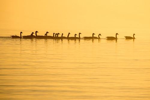 lake silhouette canon golden 50500 huron goderich 7dmkii