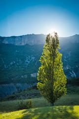 Alpine sunshine