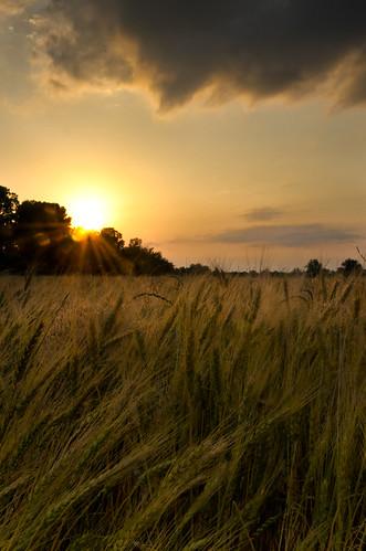 sunset oklahoma field wheat agriculture bixby amberwavesofgrain