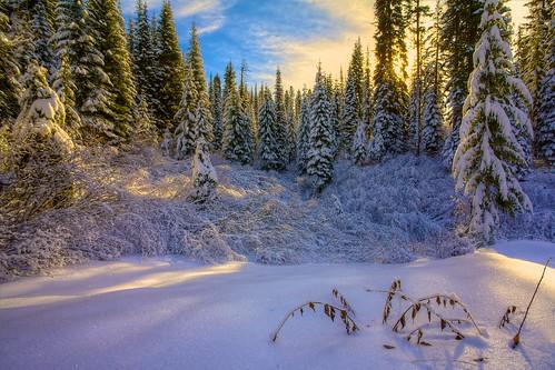 Winter wonderland | by Blue Hour Admiral