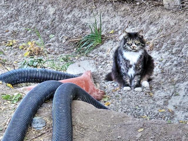 What  are You Looking at? (Ghetto Cat)