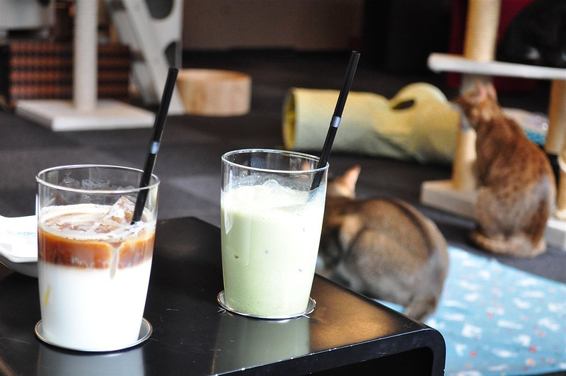 Calico Cat Cafe Shinjuku