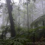 07 Viajefilos en Australia. Dorrigo Rainforest NP 34