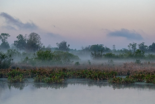 circlebbarreserve morning mist fog early marsh swamp trees water calm bush landscape polkcounty florida usa nikond5300 light sunrise