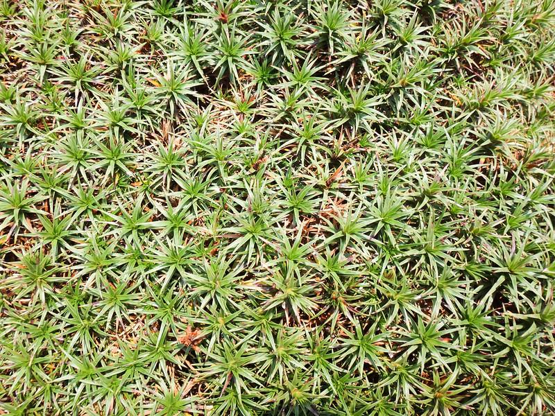 tasmania-undergrowth