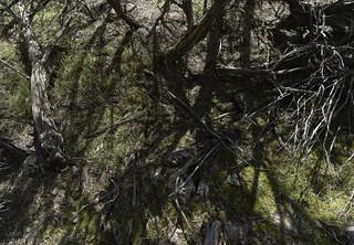 Shadow branching