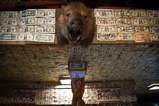 Dollar dollar boar, y'all (361/365) | by gorbould