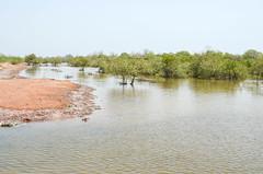Delta del Saloum