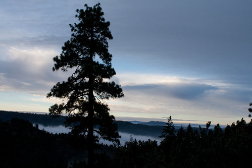 morning tree sunrise idyllwild lauraphotos