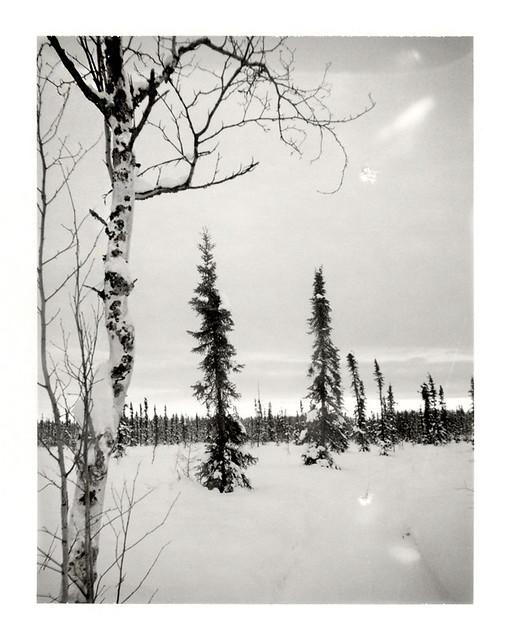 Winter Trail 2