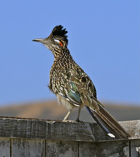 Tales of a Roadrunner 5 | by flythebirdpath > > >