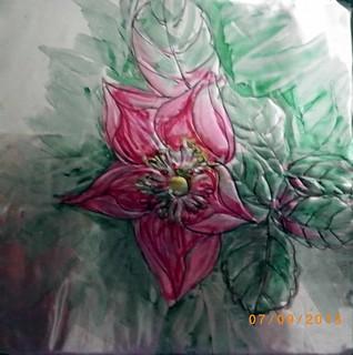 alberta rose art 2