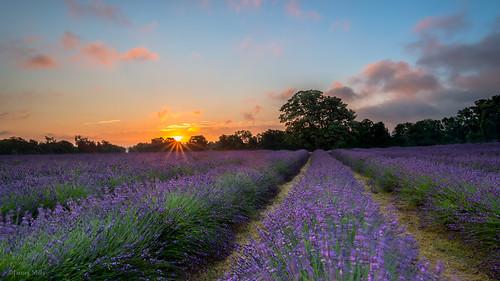 sunrise blurry nikon lavender windy surrey lee sunburst filters soggy mayfield d800 tamronspaf1735284dildasphericalif