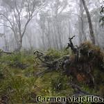 02 Viajefilos en Australia. Barrington NP 07