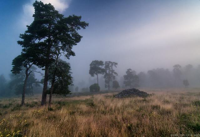 Morning fog dissolving