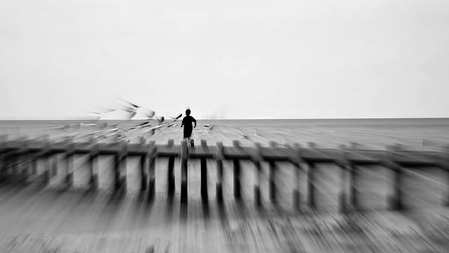 Running through the gulls