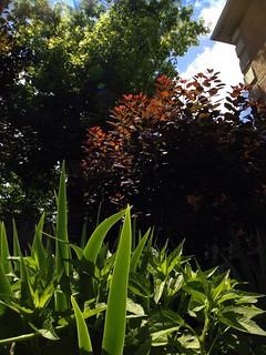 Backyard Bliss 2
