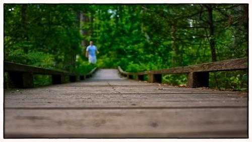 bridge large wormseyeview 0813 norfolkma massachusettsaudubon afsnikkor28300mmf3556gedvr flickrbingo2 flickrbingo2i29