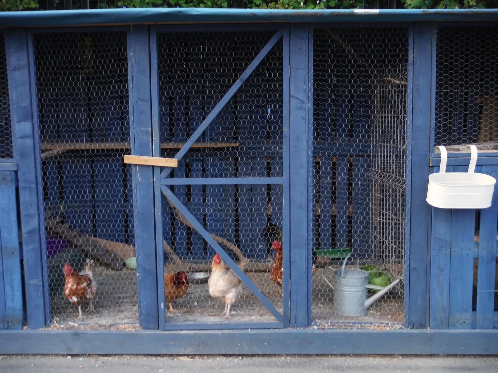 Chicken coop at Cody Dock SWC Short Walk 21 - The Line Modern Art Walk (Stratford to North Greenwich)