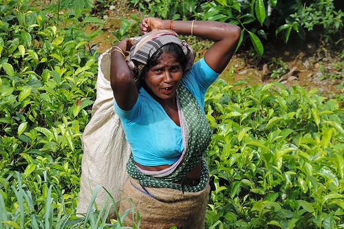 travel people teaplantations teapicking landscape tropics nature cloudforest jungle trees flora ceylon knucklesmountainrange srilanka southasia asia atwork dnysmphotography dnysmsmugmugcom