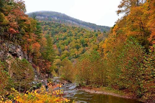fallleaves fall river fallfoliage wv westvirginia potomacriver alleghenymountains smokehole nikond700 smokeholewv
