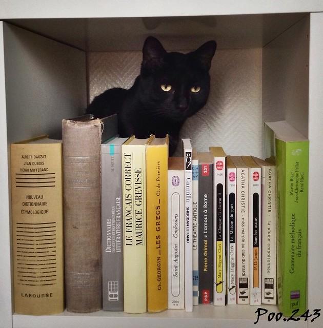 Knowledge cat