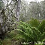 02 Viajefilos en Australia. Barrington NP 12