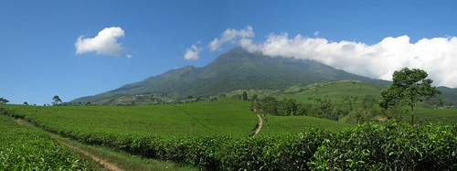 nature landscape hill teaplantation visitindonesia