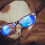 眼鏡のレンズにブルーライト軽減コーティングしたら青くなりよった。 #cat #neko #eyeware
