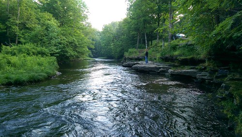 green forest river newyorkstate camden trout fishing stream
