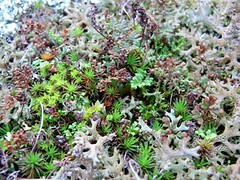 Mosses lichen and rock ferns