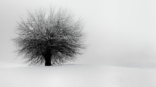 snow on my way... | by Luisella Giolitto ( 1.500.000 visits )