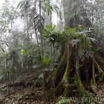 07 Viajefilos en Australia. Dorrigo Rainforest NP 22