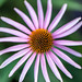 2015-08-06-yardflowers-1544
