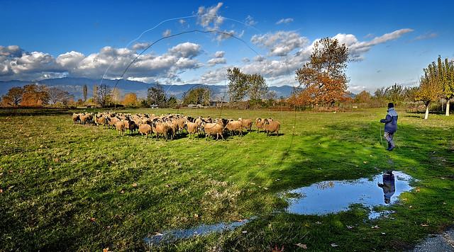 Βοσκός  Sheepherder