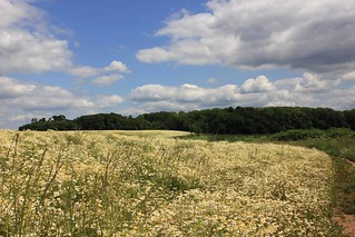 Looking East towards Sharphill Wood   by Guy R
