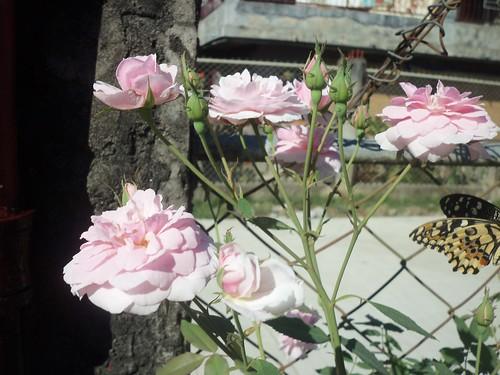 flowers 4 u 009