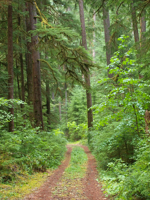 OREGON RAIN FOREST